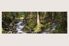 """DAPPLED GIANTS II"" Mt. Baker National Forest, Washington State | Flowers and Trees | Steve Hansen Fine Art Landscape Photography"