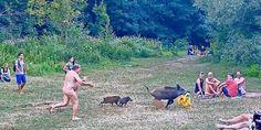 Περίεργααγριογούρουνα συναντούν κολυμβητές στη λίμνη Τόιφελζέετου Βερολίνου: φωτογραφίες στο κοινωνικό δίκτυο Facebook δείχνουν έναν γυμνό Berlin, German Men, Meanwhile In, Wild Boar, Nude Beach, Relaxing Day, Adele, Germany, Pictures