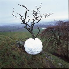 Hawthorn Tree Snowball / Andy Goldsworthy