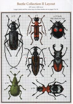 beetle collection 2 (2/11)