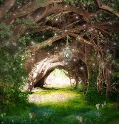 """Looking for inspiration for an """"Enchanted Forest"""" that I need to create for a Grades 4-6 event. This is so lovely!"""