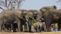 Little Makalolo #DensityDustDrama Your Turn, Zimbabwe, Best Games, Elephants, Lions, Wilderness, Woodland, Safari, National Parks