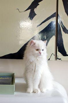 design*sponge best of cats!