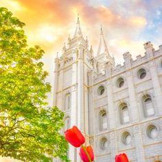 salt-lake-temple-tulips-sunset-west