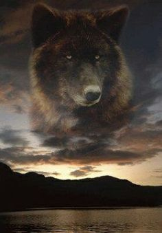 shared by +WoodsSpirit Wolf