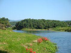 Kikuchi river