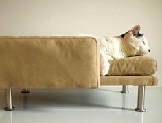 Modern Pet Bed chaise lounge chair Cat Bed / Small Dog by ModPet, $130.00