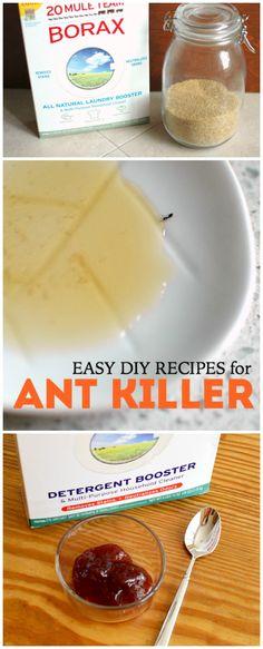 Easy DIY Recipes for Ant Killer