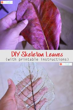 Learning how to make skeleton leaves to use in your home decor is easy. This step-by-step tutorial will show you how. - The Kreative Life