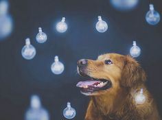 Teen Girl Shoots Beautiful and Creative Portraits of Her Pet Dogs