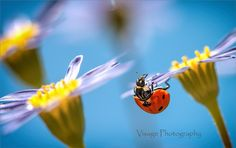 Useful Composition Tips for Aspiring Macro Photographers