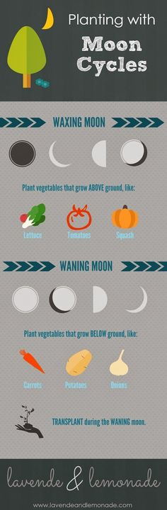 How to plant using the MOON as a guide!