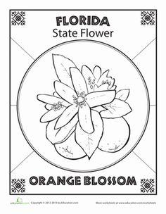 Florida State Symbols Coloring Pages | Florida State Flower | Worksheet | Education.com