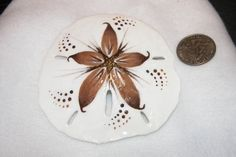 Lovely Hand Painted LARGE Sand Dollar Wall Hanging/Decor/Art! by GlasSeaArtiste on Etsy
