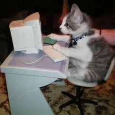 15 Katten en een schildpad die je willen helpen met computeren | NSMBL.nl