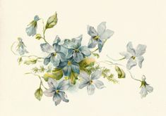 Antique Images: Free Flower Clip Art: Vintage Illustration of a Bunch of Blue Forget-Me-Not Flowers