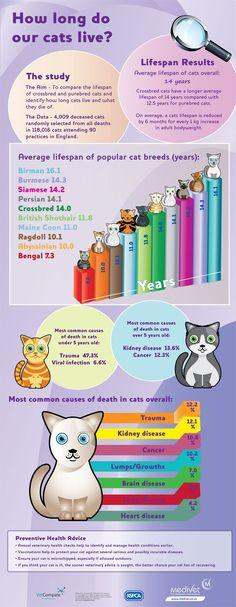 14 Kitten Stuff Ideas Cat Care Kitten Cats