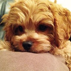 """""""#PuppyDay = best day! So much love for all the pups out there  #puppiesrule #nationalpuppyday"""""""