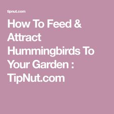 How To Feed & Attract Hummingbirds To Your Garden : TipNut.com