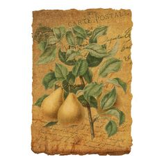 Vintage Pears Ephemera Collage Vintage Botanical Pears Illustration... ($23) ❤ liked on Polyvore featuring home, home decor, wall art, pear and pear wall art