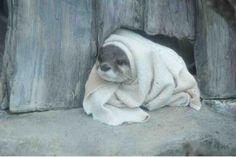 no, the otter blanket!