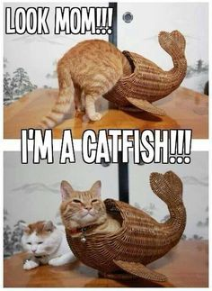 #Look #mom I'm a #catfish ! #caturday #LetsGetWordy
