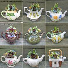 succulents + teapots