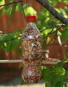 bird feeders made with plastic bottles