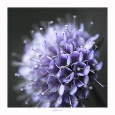 Puple Wild Flower  Contemporary Art Print  by CrionnaPhotography, $25.00