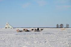 Reindeers in Nallikari!