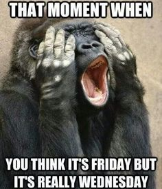 That Moment When You Think Its Friday But Its Really Wednesday good morning wednesday happy wednesday funny wednesday quotes wednesday image quotes wednesday quotes and sayings Wednesday Humor, Happy Wednesday, Wednesday Sayings, Hump Day Humor, Thursday, It's Friday Humor, Tuesday Meme, Wednesday Coffee, Wednesday Morning