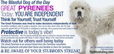 The Great Pyrenees - Zoe, our Pyr, graces this card. Intelligent, stubborn, resilient and brave! Bred to think on their own, Pyrs amaze those who get to know them. Click for complete article.