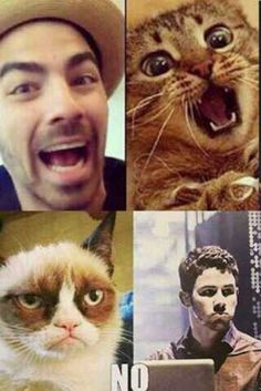 Jonas Brothers. This is funny