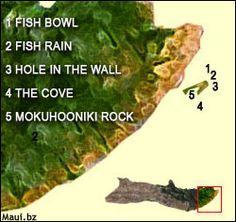 Best spots in Maui for Snorkeling