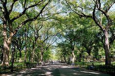 Central Park - New York - USA - in spring...