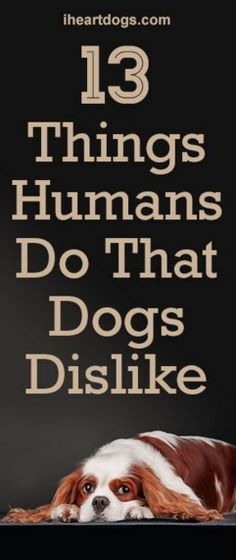 13 Things Humans Do That Dogs Dislike. Good reading & info.