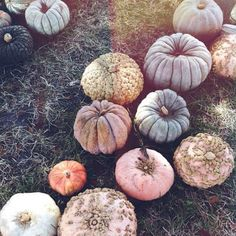 It's almost pumpkin season: pink, grey, and gold pumpkins. The least basic way to decorate a pumpkin. Hello Autumn, Autumn Day, Autumn Leaves, Fall Winter, Fall Season, Tis The Season, Season Change, Autumn Aesthetic, Happy Fall Y'all