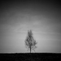 Samotnik