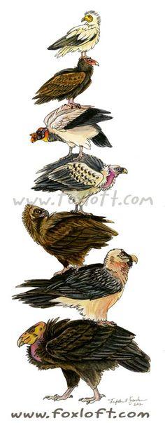 Vulture stack! Prints available $15 : http://foxloft.com/image/vulturestack