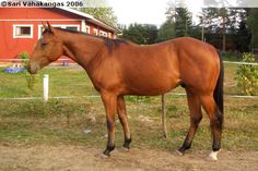 Quarter Horse - gelding Will It Skip