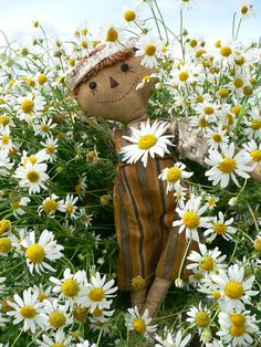 Country Living ~ happy scarecrow in the daisies