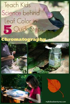 How to unlock all of the hidden secrets in a leaf through chromatography. A simple science experiment done with items you have around the house