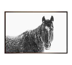 "Snowy Black Horse by Jennifer Meyers, 28 x 42"", Wood Gallery, Espresso, No Mat"