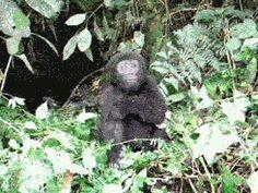 Indian Monkey Photos Animals Giff #7331 - Funny Monkey Giffs| Funny Giffs| Monkey Giffs