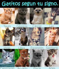 gatitos                                                       …