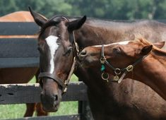 Zenyatta and colt Zenyatta Horse, Thoroughbred Horse, Sport Of Kings, All About Horses, Racehorse, Race Day, Four Legged, Horse Racing, Beautiful Pictures