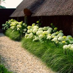 Hydrangeas And Ornamental Grasses Landscaping. You can create a natural fences with hydrangeas combined with ornamental grasses. Hydrangea Landscaping, Front Yard Landscaping, Landscaping Ideas, Landscaping With Grasses, Landscaping Borders, Landscaping Software, Garden Borders, Landscaping Melbourne, Hillside Landscaping