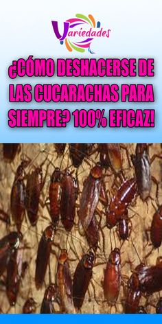 ¿CÓMO DESHACERSE DE LAS CUCARACHAS PARA SIEMPRE? 100% EFICAZ!. #cucaracha #deshacer #mundo Makita, Compost, Cleaning Hacks, Tips, Food, Rose Recipe, Mosquitos, Sprays, Patio Ideas