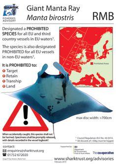 Giant Manta Fisheries Advisory  #SharkTrust