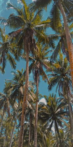 Ocean Wallpaper, Summer Wallpaper, Tree Wallpaper, Iphone Background Wallpaper, Scenery Wallpaper, Aesthetic Pastel Wallpaper, Aesthetic Wallpapers, Images Esthétiques, Applis Photo